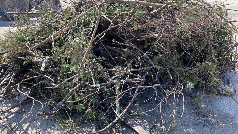 wywóz odpadów zielonych